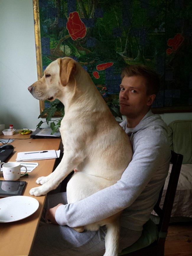 chien-drole-4