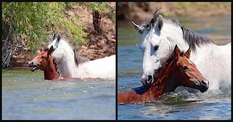 chevaux-noyer