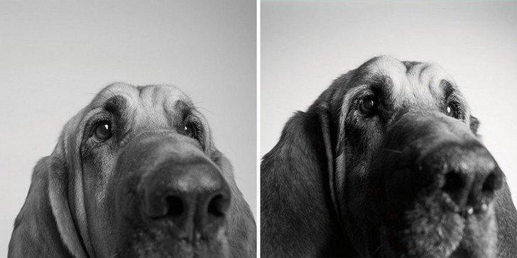 chien-6