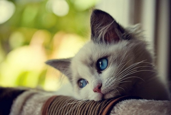 chat-triste