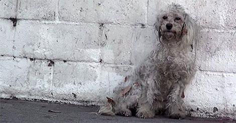 chien-abandonne-realise-sauve