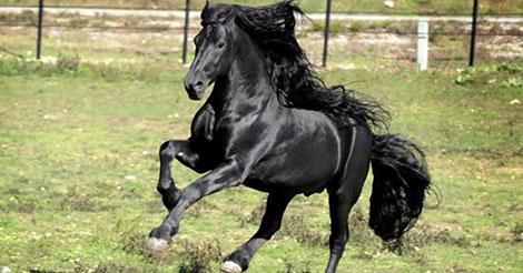 cheval-plus-beau-cheval-du-monde