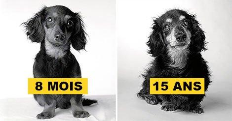Comment les chiens vieillissent : des photos fascinantes et profondément touchantes