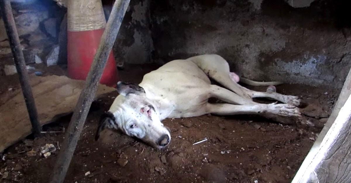 Ils trouvent un chien brisé sur le point de mourir, mais sa nouvelle famille refuse de perdre espoir