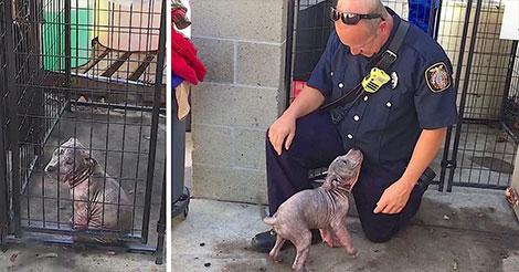 Un chiot était malheureux dans un refuge,  jusqu'à ce qu'il soit réuni avec le pompier qui lui a sauvé la vie