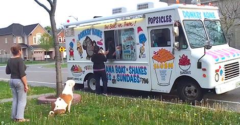 Un Pit Bull attend patiemment son tour dans la queue pour avoir sa glace à la vanille