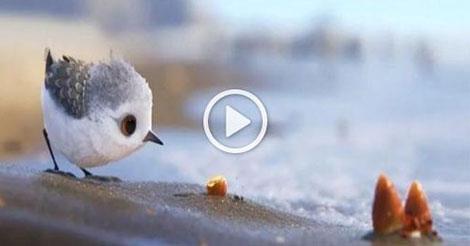 PIPER, le nouveau et très beau court métrage Pixar qui nous apprend à regarder les choses différemment