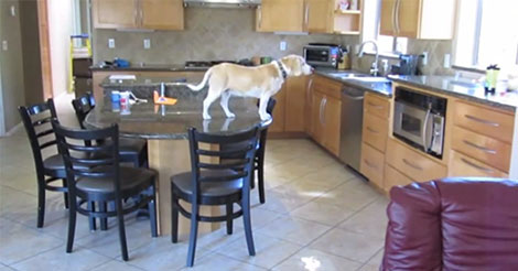 chien-cuisine-abs