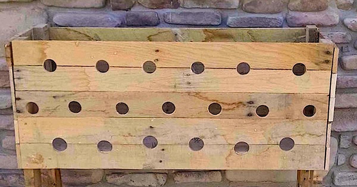 Elle fait 19 trous dans cette jardinière en bois. Maintenant regardez ce qui se passe après 5 mois.