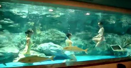 natation synchro aquarium
