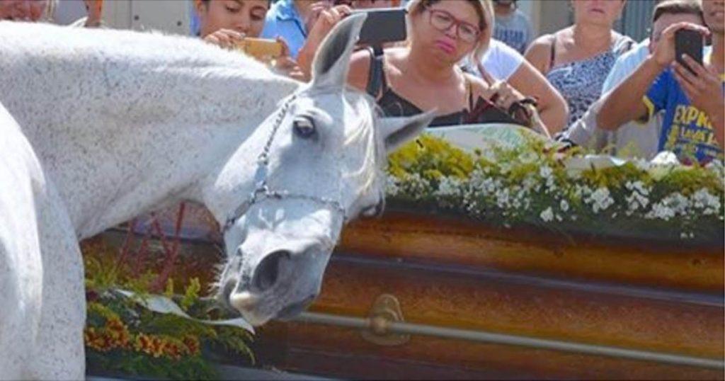 Le cavalier meurt dans un accident. Mais ce qu'a fait le cheval sur son cercueil m'a fait pleurer.