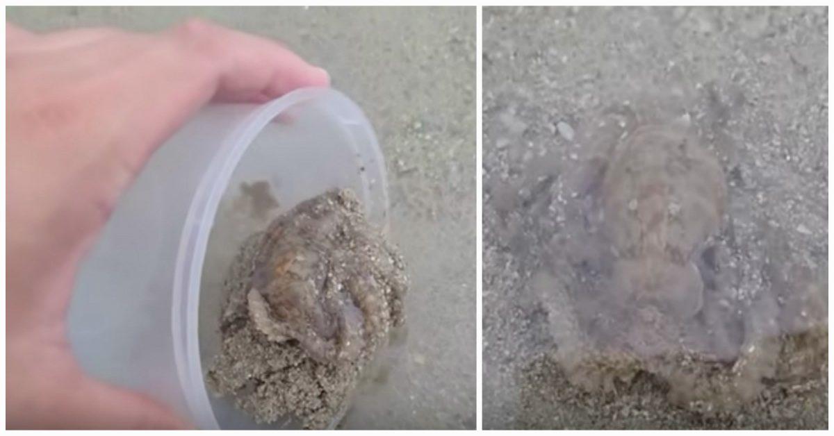 Un homme sauve une pieuvre échouée, mais il ne s'attendait pas à ce qu'elle le remercie. Il n'oubliera jamais ce moment.