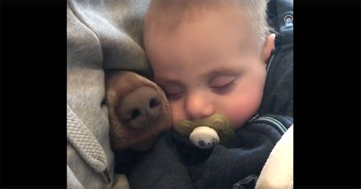 Cette maman est en train de filmer le bébé qui fait la sieste quand subitement un nez s'incruste
