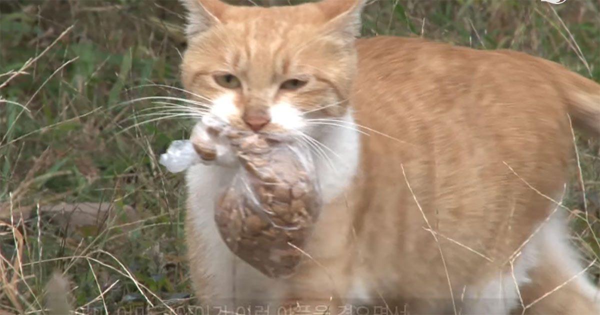 Le chat errant refuse la nourriture à moins qu'elle ne soit dans un sac qu'elle peut transporter. Un jour, ils la suivent et comprennent pourquoi…