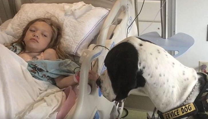 Le dogue allemand s'approche de son lit d'hôpital, maintenant fixez bien le dos du chien