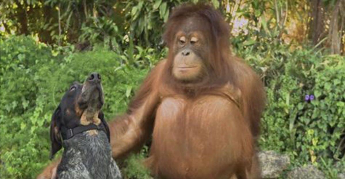Tout le monde sur la planète doit regarder cette vidéo d'une minute sur les animaux.