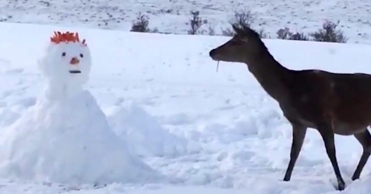 Le cerf salue une créature inhabituelle. Mais c'est son prochain mouvement qui a fait rire internet