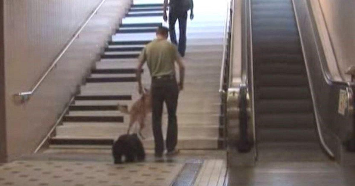 L'homme remarque l'aspect étrange de l'escalier. Regardez la chose incroyable qui se produit quand il commence à monter