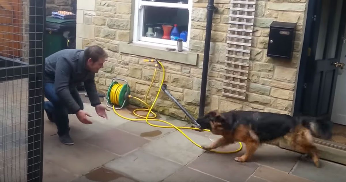 Cette rencontre entre un homme et son chien après des mois de séparation m'a beaucoup ému