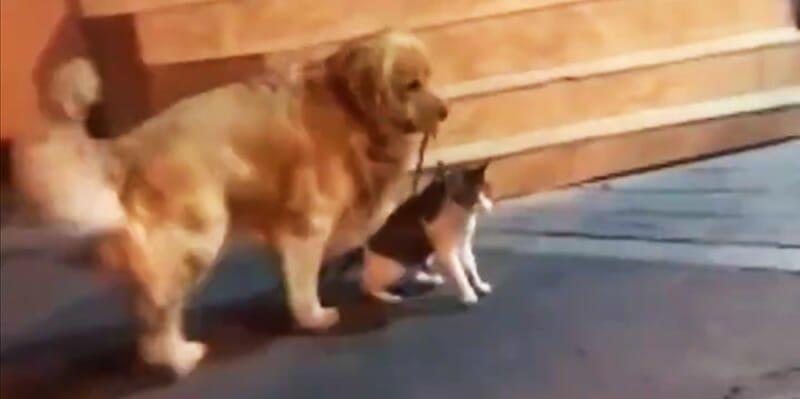 Internet adore ce chien qui empêche son ami chat d'entrer dans une bagarre