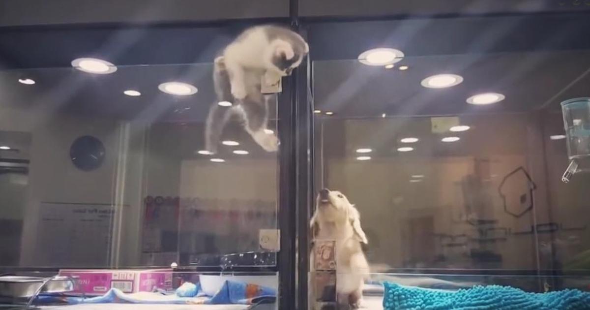 Un chaton s'échappe de l'animalerie pour rejoindre son ami, un chien solitaire