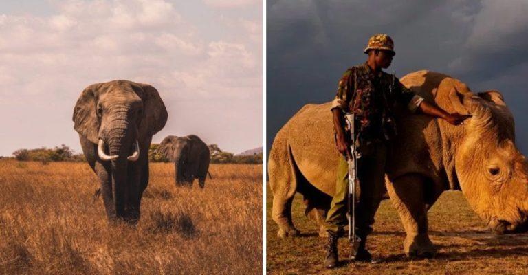 Le Kenya a décidé de punir de la peine de mort la chasse illégale d'animaux menacés d'extinction
